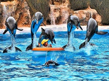 Delfini Loro Parc Tenerife